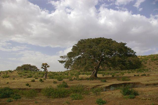 Zdjęcia: gdzieś po drodze, Północna Etiopia, To też Etiopia, ETIOPIA