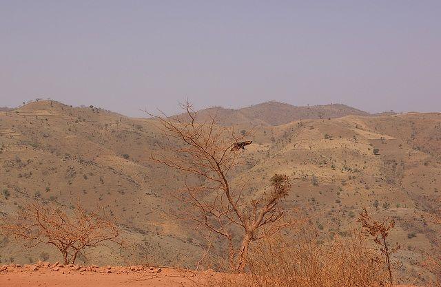 Zdjęcia: gdzieś po drodze, Północna Etiopia, Prawie martwa natura, ETIOPIA