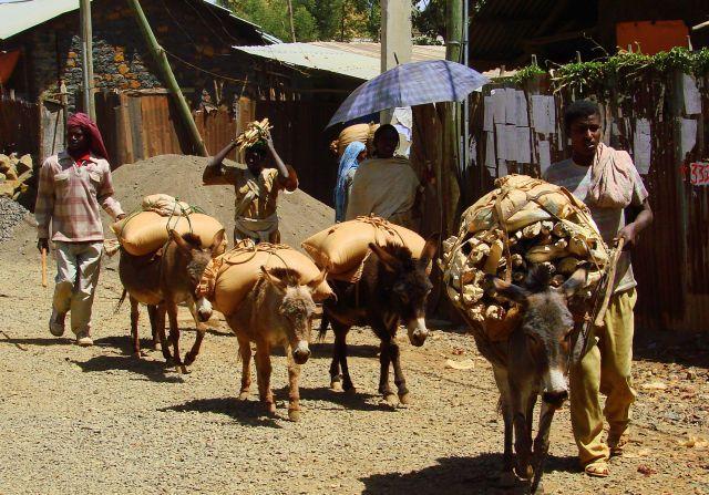 Zdjęcia: Etiopia, Etiopia, Osiołki, ETIOPIA