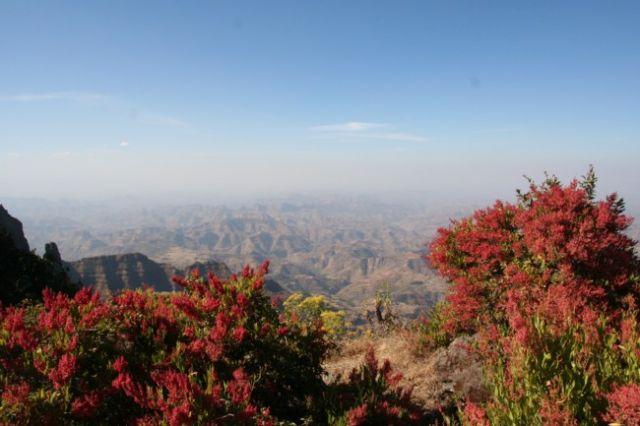 Zdjęcia: Góry Simen, etiopska roślinność, ETIOPIA