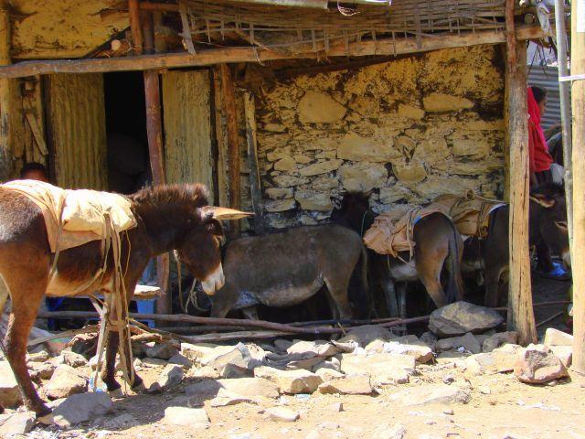 Zdjęcia: Gandor, Gandor, Zajezdnia, ETIOPIA
