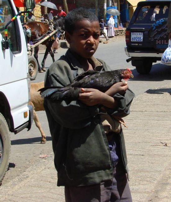 Zdjęcia: Gandor, Gandor, Koguta  ma , ETIOPIA