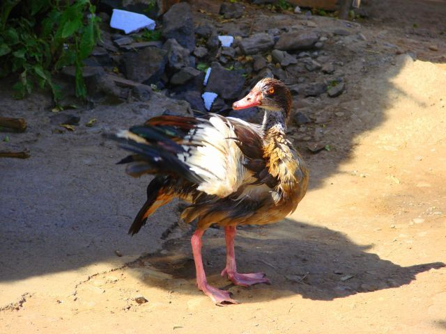 Zdjęcia: Gandor, Gandor, Afrykańska, ETIOPIA