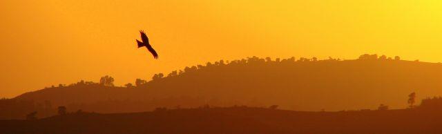 Zdjęcia: Gandor, Gandor, Widziałem  orła, ETIOPIA