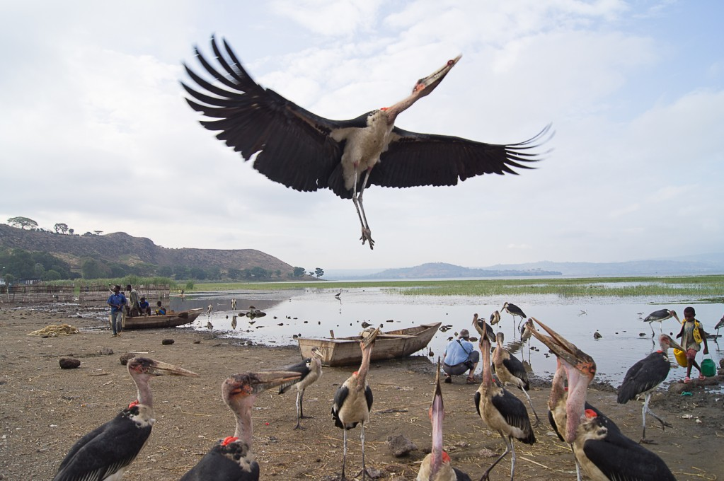 Zdjęcia: Awassa, Awassa, Pora karmienia, ETIOPIA