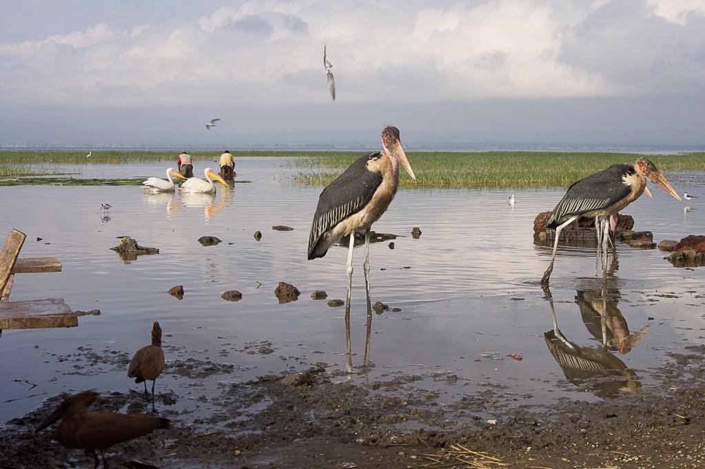 Zdjęcia: Awassa, Awassa, Jezioro wyżywi wszystkich, ETIOPIA