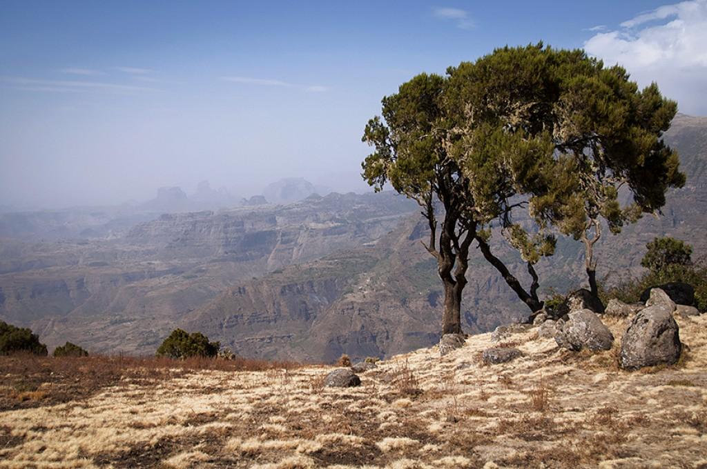 Zdjęcia: góry Semien, góry Semien, ETIOPIA
