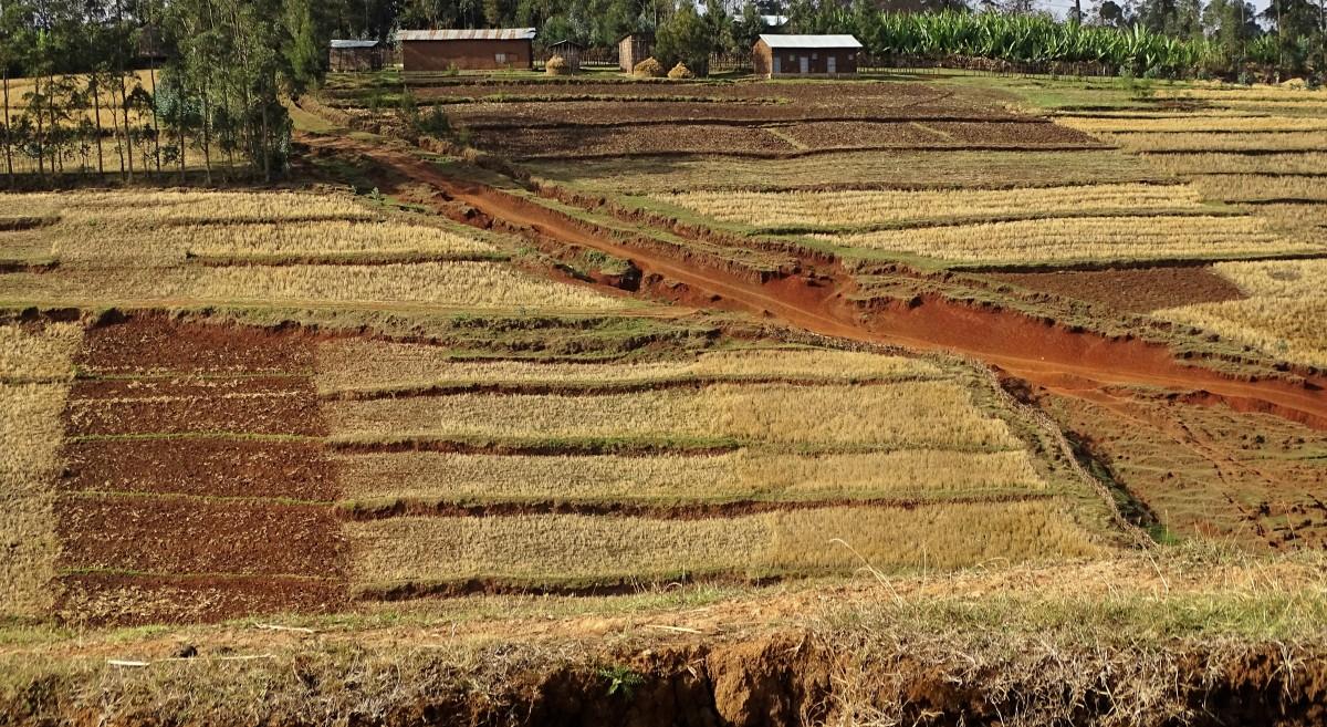 Zdjęcia: gdzieś po drodze, Centrum, Dywanik ;-), ETIOPIA