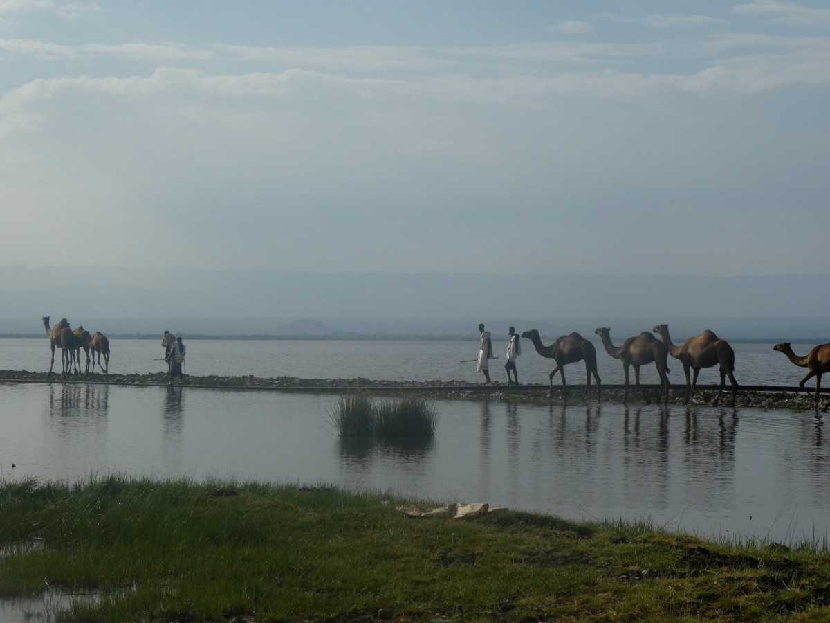 Zdjęcia: jezioro w drodze do parku, Auash, grobla, ETIOPIA