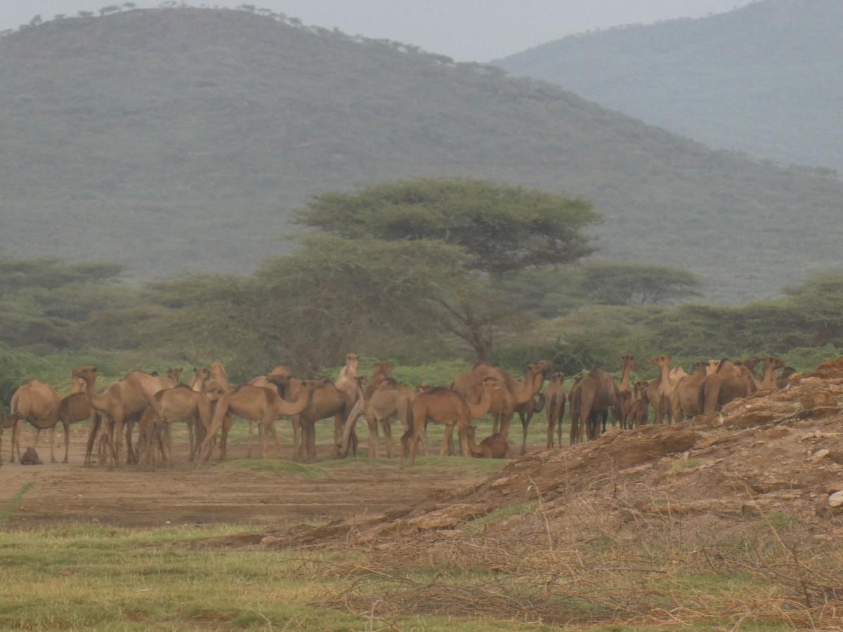 Zdjęcia: jezioro w drodze do parku, Auash, poranek , ETIOPIA