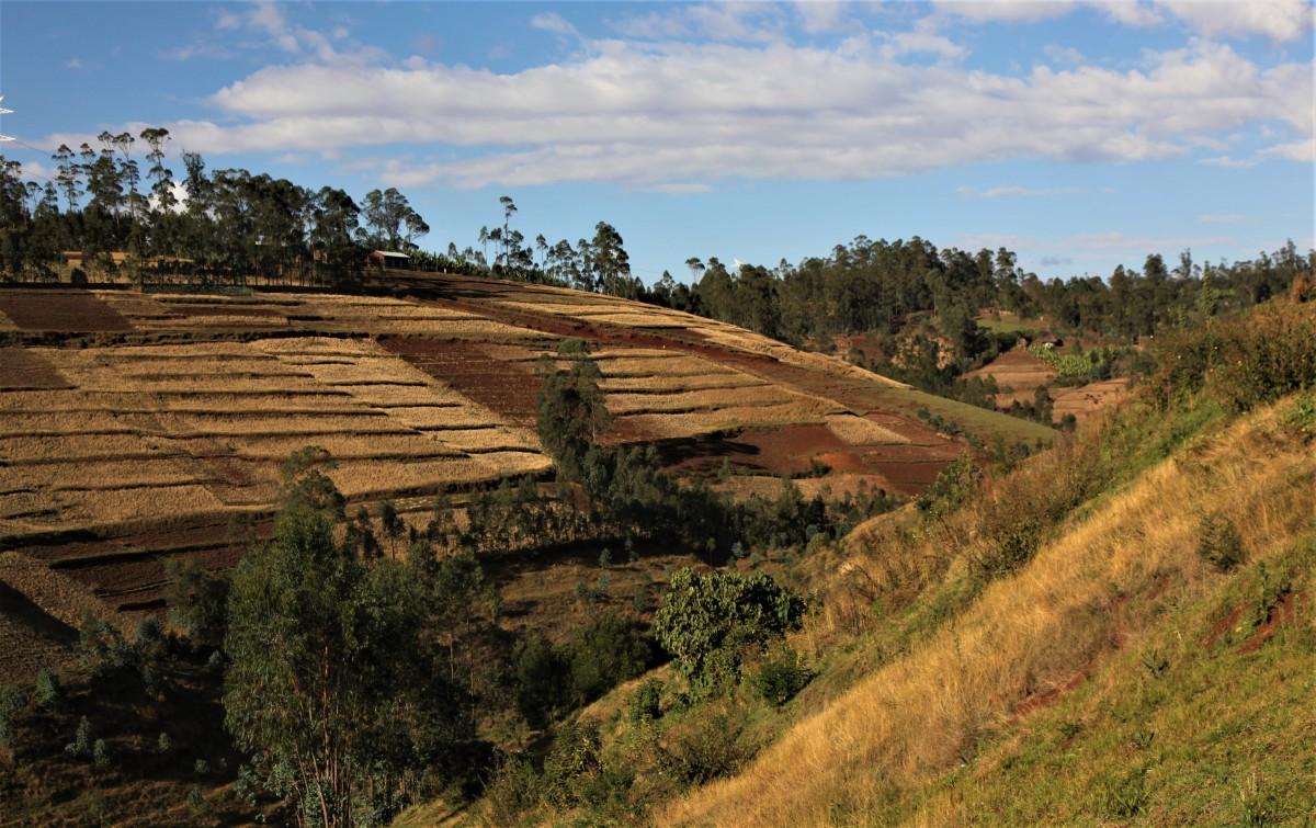 Zdjęcia: Adadi, Arba Minch, Pola uprawne, ETIOPIA