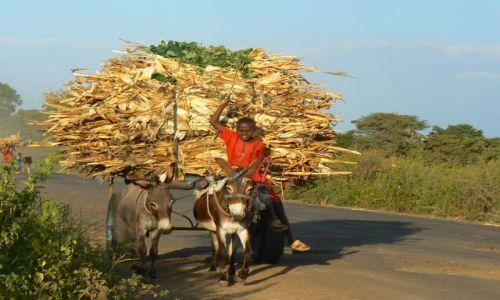 Zdjecie ETIOPIA / - / gdzieś na wsi / W drodze z pola