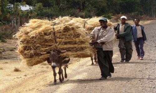 Zdjecie ETIOPIA / Oromia / Roge / Transport