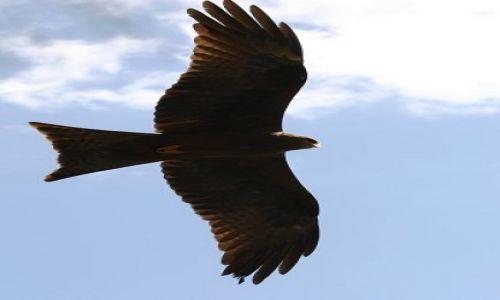 Zdjecie ETIOPIA / Południe kraju / Park Narodowy / Ptaszysko:)