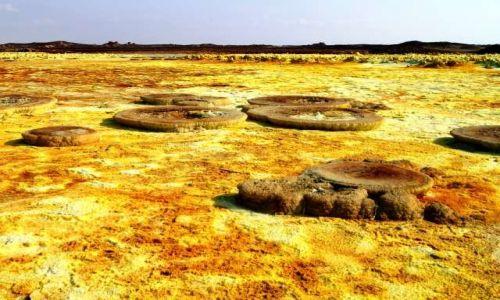 Zdjecie ETIOPIA / Afar / Dallol / Takie grzyby też rosną