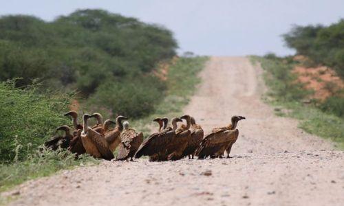 Zdjecie ETIOPIA / Negele / Goba / W oczekiwaniu na globtroterów
