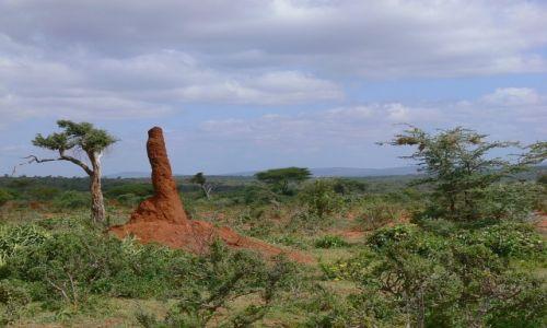 Zdjecie ETIOPIA / Yabello / Goba / Termitiera