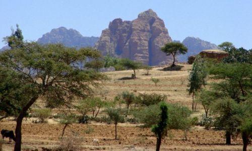 Zdjęcie ETIOPIA / Etiopia / Etiopia / zielono