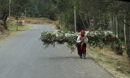 Zdjecie ETIOPIA / Północ Etiopii / Gdzieś po drodze / Kobieca dola