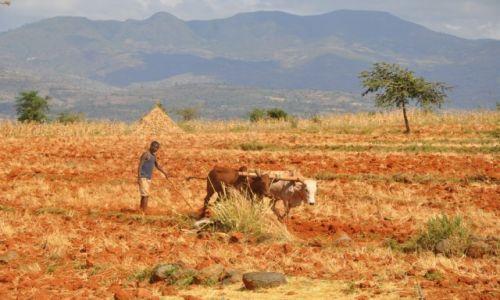 ETIOPIA / Dolina Omo / Okolice Jinka / Tradycyjna Orka