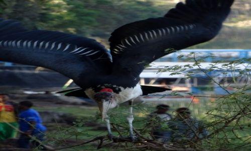 ETIOPIA / Awasa / Jezioro Awasa / Wielki Ptak