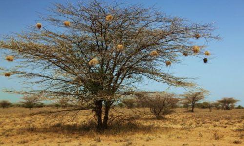 Zdjęcie ETIOPIA / Dolina Omo / W drodze do wioski Karo / Osiedla wikłaczy
