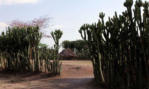 Zdjecie ETIOPIA / Dolina Omo / W drodze do Jinka / Kaktusowa zagroda