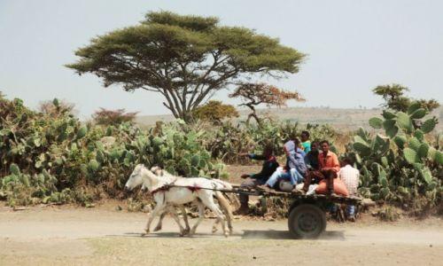 Zdjecie ETIOPIA / Dolina Omo / Awassa / Wiśta wio