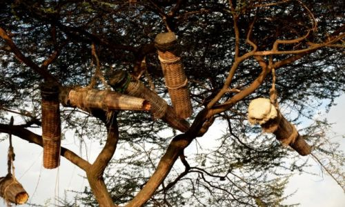 Zdjęcie ETIOPIA / Gdzieś po drodze / po drodze / Pożywienie - tak zbiera się miód do m. in. pączusiów