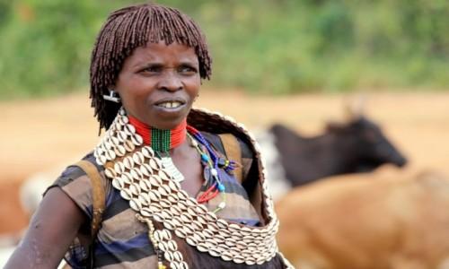 Zdjęcie ETIOPIA / Omo / gdzieś po drodze / Hamerka i krowy