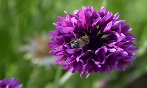 ETIOPIA / Dolina Omo / różnie :-) / Skoro wiosna, to kilka kwiatków z Etiopii