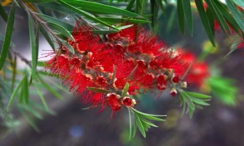 Zdjęcie ETIOPIA / Dolina Omo / różnie :-) / Skoro wiosna, to kilka kwiatków z Etiopii