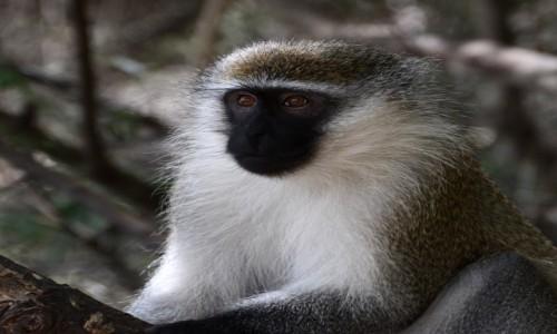 Zdjecie ETIOPIA / Nechisar National Park / okolice jeziora Chamo / Zamiast kota:)