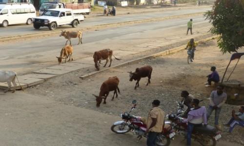 Zdjęcie ETIOPIA / Dolina Omo / Dżinka / Dżinka centrum