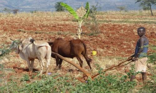 Zdjęcie ETIOPIA / DOLINA OMO / Droga / Praca w polu
