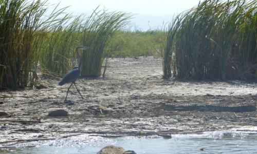 ETIOPIA / Jezioro Chomo / Jezioro Chamo / Jezioro Chamo -miłość, szmaragd i krokodyl