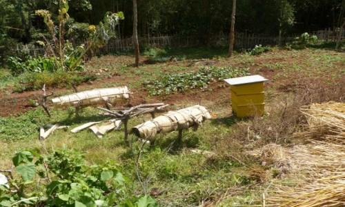 Zdjęcie ETIOPIA / DOLINA OMO / Dorze / Ule  w wiosce Dorze