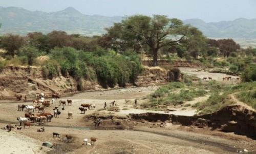 Zdjęcie ETIOPIA / Konso / Rzeka Sagan. / W czasie suszy