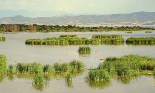 Zdjęcie ETIOPIA / Park Narodowy Nechisar / Jezioro Chamo / Jezioro Chamo