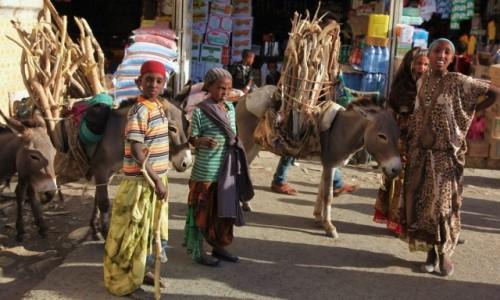 Zdjęcie ETIOPIA / Harar  / Bazar / Sprzedaż opału