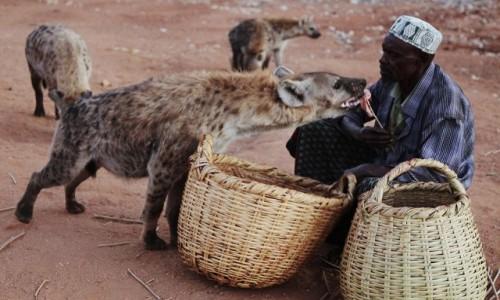 Zdjęcie ETIOPIA / Harari / Harar  / Karmiciel hien