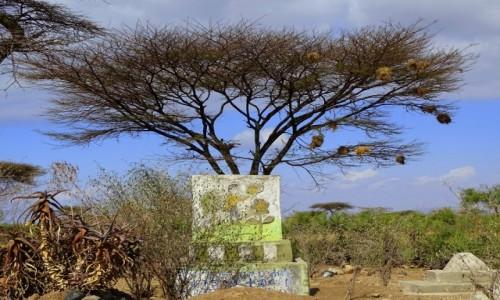 Zdjęcie ETIOPIA / środkowa Etiopia / - / Cmentarz muzułmański
