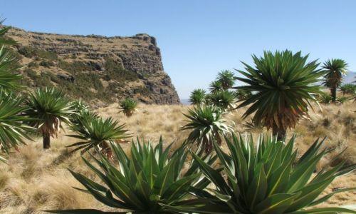 Zdjecie ETIOPIA / Góry Siemen / Siemen Mountains / No, ja wymiękałem!