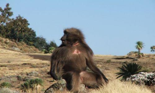 Zdjęcie ETIOPIA / Góry Siemen / Siemen Mountains / A tak mam z profila