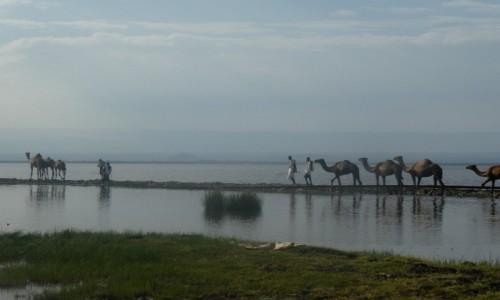 Zdjecie ETIOPIA / Auash / jezioro w drodze do parku / grobla