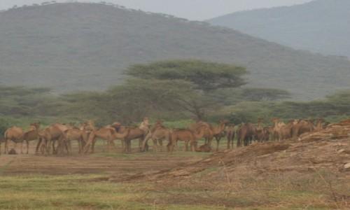Zdjecie ETIOPIA / Auash / jezioro w drodze do parku / poranek