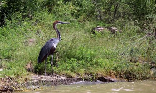 ETIOPIA / - / Jezioro Chamo / A gdzie moja ryba?