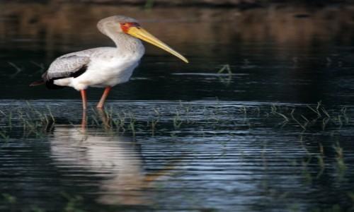 Zdjecie ETIOPIA / - / Jezioro Chamo / Tam gdzie moja w wodzie.