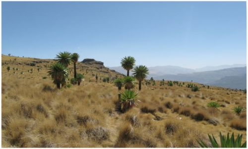 Zdjęcie ETIOPIA / Góry Siemen / jw / Siemen Mts National Park