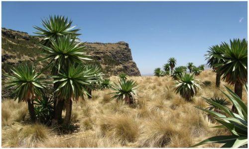 Zdjecie ETIOPIA / Siemen Mts / Siemen Mts / Powyżej 3800 mnpm